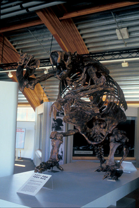 Jefferson's Ground Sloth exhibit, Beringia Museum, Whitehorse, Yukon Territory